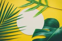 Echte bladeren met witte exemplaar ruimteachtergrond Tropische Botanisch stock foto's