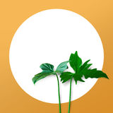 Echte bladeren op pastelkleur met witte exemplaar ruimteachtergrond bot stock afbeeldingen