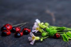 Echte Dame Bug en Dame Bug Clay Stock Fotografie
