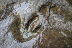 Echte dinosaurusvoetafdruk, Thailand Royalty-vrije Stock Afbeelding