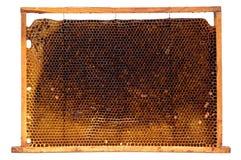 Echte honingraat die uit de geïsoleerdea bijenkorf wordt verwijderd Royalty-vrije Stock Foto's
