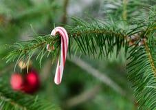 Echte Kerstboom met het hangen van traditioneel suikergoedriet Stock Afbeelding