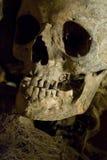 Echte menselijke schedel 2 stock afbeelding