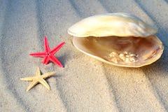 Echte parels in overzeese shell en zeesterren Stock Afbeeldingen