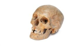Echte schedel van mens. Geïsoleerds. Stock Foto's