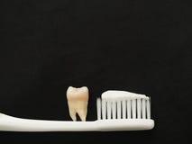 Echte tand op witte tandenborstel met tandpasta op zwarte achtergrond Goed gezond tandenconcept Royalty-vrije Stock Fotografie