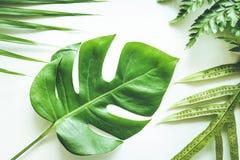 Echte tropische bladeren geplaatst patroonachtergronden op wit Vlak leg stock fotografie