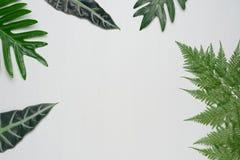 Echte tropische bladeren op witte houten achtergrond Botanische aardconcepten Vlak leg hoogste mening stock foto