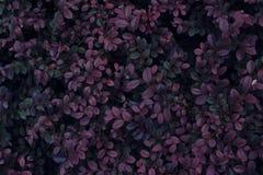 Echte tropische bladerenachtergrond, wildernisgebladerte Royalty-vrije Stock Afbeeldingen
