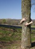 Echter Baum Hugger lizenzfreies stockbild