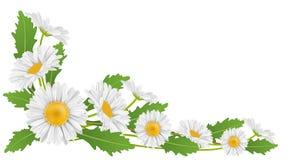 Eckdekoration mit Blume und Blatt des weißen Gänseblümchens Stockbilder