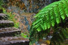 Ecke des Parks auf der Insel von San Miguel Lizenzfreies Stockbild