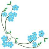 Ecke mit Blau vergessen mich nicht Blumen auf einem weißen Hintergrund Stockbild