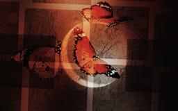 Eclipse de la mariposa imagen de archivo