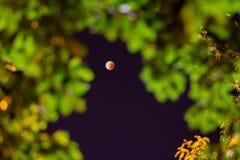 eclipse lunar 2015 del supermoon Imagen de archivo