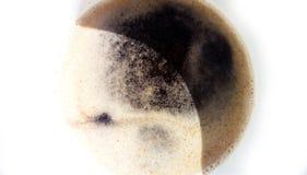 Eclissi araba del cofe immagine stock libera da diritti