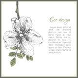 Eco卡片与狗玫瑰花的模板设计 免版税库存图片