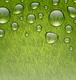 Eco友好的背景用水在新绿草te下降 库存例证