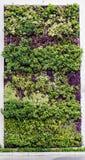 Eco友好的绿色墙壁 库存图片