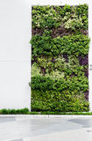 Eco友好的绿色墙壁 免版税库存图片