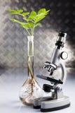 eco实验室 免版税库存图片
