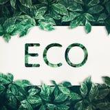 Eco文本有绿色叶子背景 友好, eco 免版税库存图片
