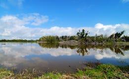 Eco池塘 库存照片
