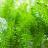Eco自然/defocused绿色摘要的背景 春天夏天 免版税库存图片