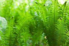 Eco自然/defocused绿色摘要的背景 春天夏天 库存照片