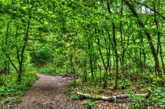 Eco足迹 库存图片