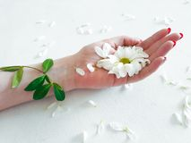 Eco τρόπου ζωής βοτανικό λουλούδι προσοχής χλωρίδας οργανικό Στοκ Φωτογραφία