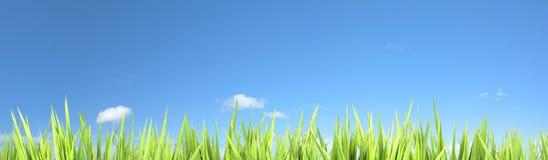 eco предпосылки панорамное Стоковое фото RF