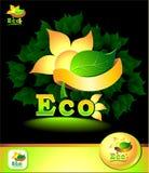 eco принципиальной схемы Стоковое Изображение RF