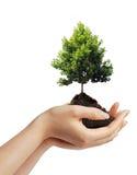 eco принципиальной схемы бесплатная иллюстрация
