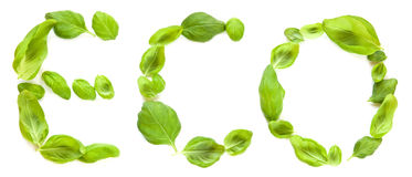 Eco. The word eco for ecology written with fresh green basil leaves Stock Photography