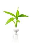 电灯泡在轻的工厂里面的概念eco 图库摄影