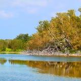 Eco池塘大沼泽地国家公园 免版税库存图片