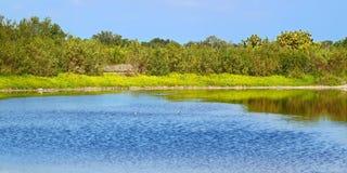 Eco池塘大沼泽地国家公园 免版税库存照片
