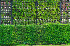 Free Eco And Modern Vertical Garden Nature Fresh Wall. Stock Image - 87430741