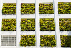Eco architecture. Building with hydroponic plants instead of windows. Ecology environment concept Royalty Free Stock Photo