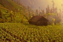Eco-azienda agricola Immagine Stock