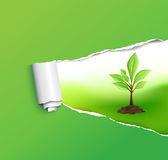 Eco Background Royalty Free Stock Image