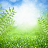 Eco background Stock Image