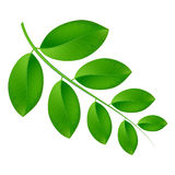 Eco background branch with green leaves. Royalty Free Stock Images