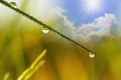 Eco background with dew drops Royalty Free Stock Images