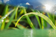 Eco background with Dew Drops and water Royalty Free Stock Image