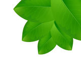 Eco background with fresh green leaves. Stock Images