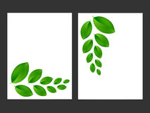 Eco background with fresh green leaves. Royalty Free Stock Image