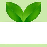 Eco background with fresh green leaves Stock Images