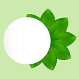 Eco background with fresh green leaves Stock Photography
